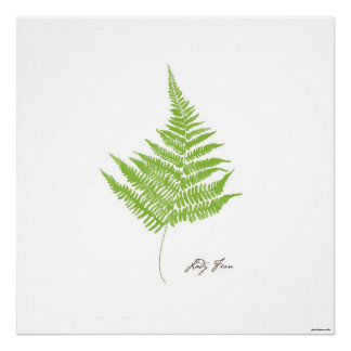 Poster Copie botanique de fougère de l'illustration | de