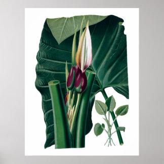 Poster Copie botanique de grand feuille tropical