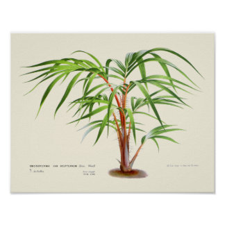 Poster Copie botanique de paume vintage