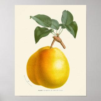 Poster Copie botanique de poire jaune vintage