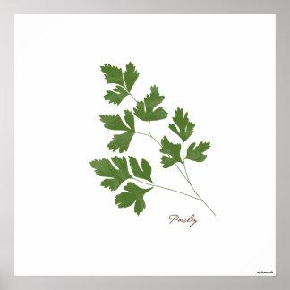 Poster Copie botanique d'herbe de l'illustration | de