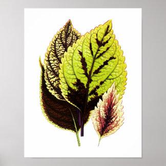 Poster Copie botanique vintage de feuille