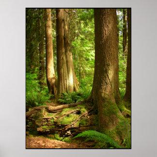 Poster Copie canadienne d'art de forêt de côte ouest de
