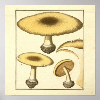 Poster Copie commune d'art de champignons de Brown de cru