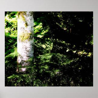 Poster Copie d'affiche de lueur de forêt