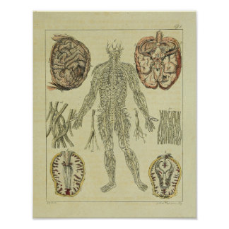 Poster Copie d'art d'anatomie de cerveau de nerfs du cru