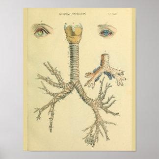 Poster Copie d'art d'anatomie de yeux de bronches de voie