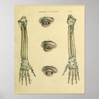 Poster Copie d'art d'anatomie de yeux d'os de main de