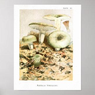 Poster Copie d'art de Brown de Russula de champignons du