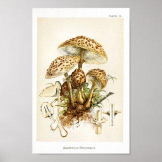 Poster Copie d'art de casquette de Brown de champignons
