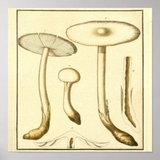 Poster Copie d'art de champignons de terrain communal de