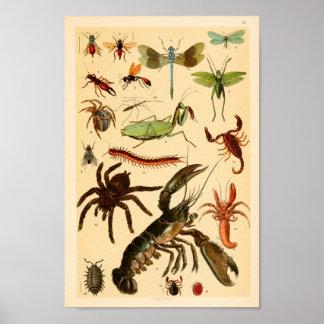 Poster Copie d'art de collection d'araignée de scorpion