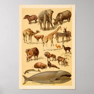 Poster Copie d'art de girafe d'éléphant de collection