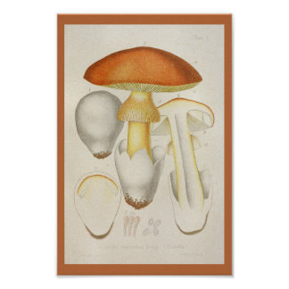 Poster Copie d'art de jaune orange de champignons du cru