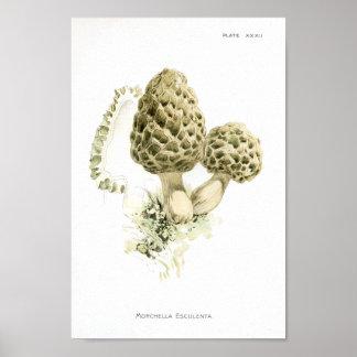 Poster Copie d'art de Morchella de champignons du cru