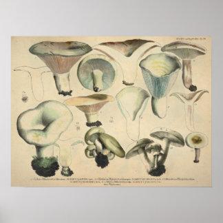 Poster Copie de Brown bleu de variété de champignon du