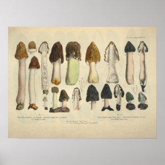 Poster Copie de Brown de vert de variété de champignon du