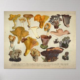 Poster Copie de Brown jaune de variété de champignon du