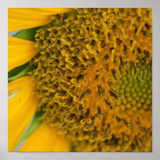 Poster Copie de fleur de récolte