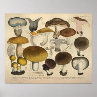 Poster Copie de jaune de Brown de variété de champignon