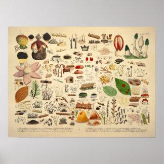Poster Copie de jaune de vert de variété de champignon du