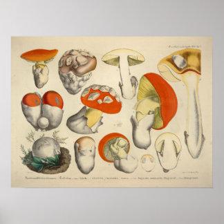 Poster Copie de jaune orange de variété de champignon du
