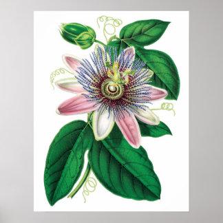 Poster Copie DE LA MEILLEURE QUALITÉ botanique de QUALITÉ