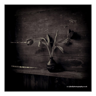 Poster Copie de photographie de beaux-arts - fleur -