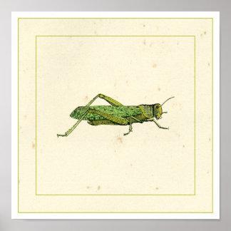 Poster Copie encadrée de sauterelle verte