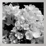 Poster Copie florale de photographie d'hortensia noir et