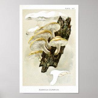 Poster Copie fongueuse d'art d'arbre de champignons du