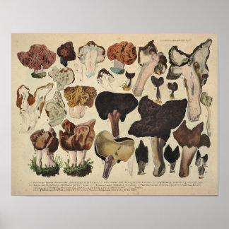 Poster Copie fongueuse de Brown de variété de champignon