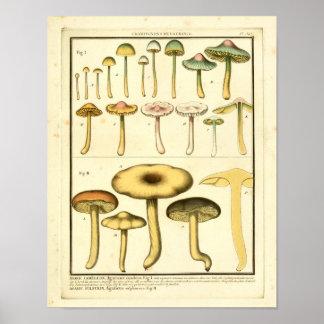 Poster Copie française d'art de champignons de jaune