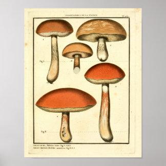 Poster Copie française d'art de champignons rouges