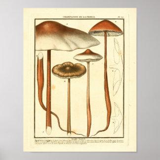 Poster Copie française d'art de champignons vintages de