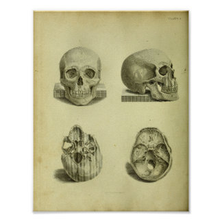 Poster Copie humaine d'anatomie de 1824 crânes