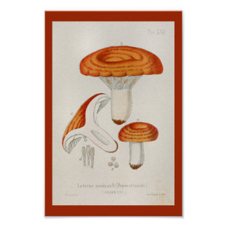 Poster Copie orange rouge d'art de champignons du cru