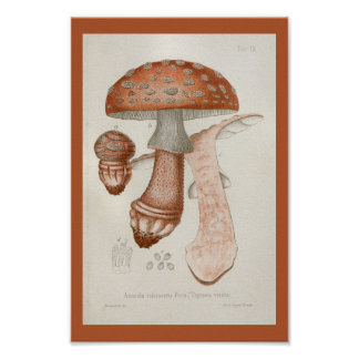 Poster Copie rouge d'art de Brown de champignons du cru