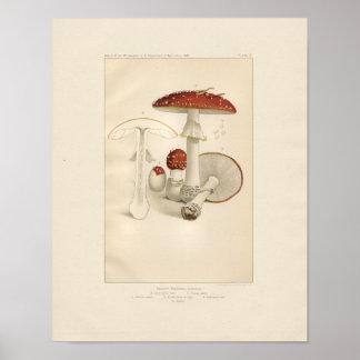 Poster Copie rouge et blanche vintage de champignons