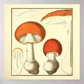 Poster Copie rouge vintage d'art de champignons de