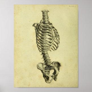 Poster Copie squelettique d'anatomie de 1824 humains