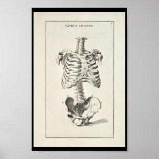 Poster Copie squelettique d'art de l'anatomie 1691