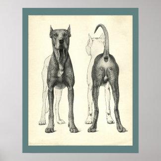 Poster Copie vétérinaire d'anatomie de topographie