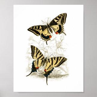 Poster Copie vintage d'affiche de papillon de machaon