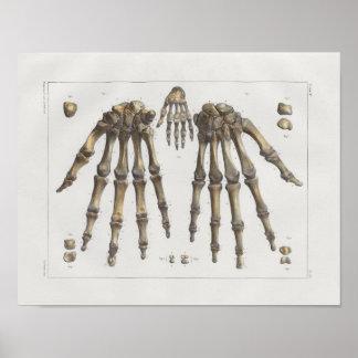Poster Copie vintage d'anatomie de 1867 de main os de