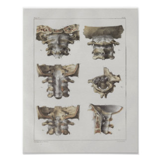 Poster Copie vintage d'anatomie de l'épine 1867 cervicale