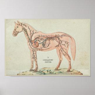 Poster Copie vintage d'anatomie de veines d'artères de