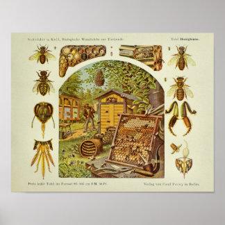 Poster Copie vintage d'art d'apiculteur d'anatomie