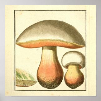 Poster Copie vintage d'art de champignons de rouge de
