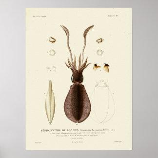 Poster Copie vintage d'art de créatures de mer de